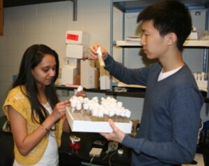 Kosha Parikh (left) and David Luor examine fruit flies for their research on cold tolerance.