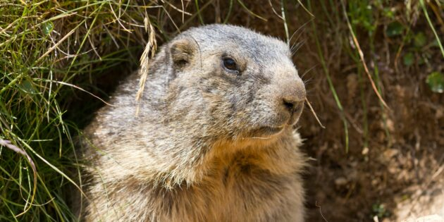 Beyond a Shadow of a Doubt: Groundhog Day Serves Psychological Purpose, says Researcher