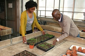 Lyla Jno Baptiste (left) and Prof. Simeon Kotchoni look over Arabidopsis thaliana, in which they found a new gene.