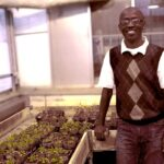 Research to Fight Pathogens That Infect Canola Takes Root at Rutgers–Camden