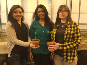 Kimberly Nguyen, Raveena Khokhar, and Tiffany Lutz (l-r) hold their tulip poplar plants in Rutgers University-Camden's greenhouse.
