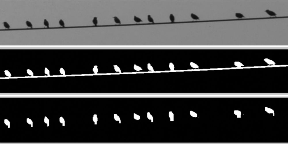 Images of birds on a wire, processed by Matlab software