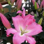 At Longwood Gardens, the participants enjoyed serene nature scenes and beautiful flowers.